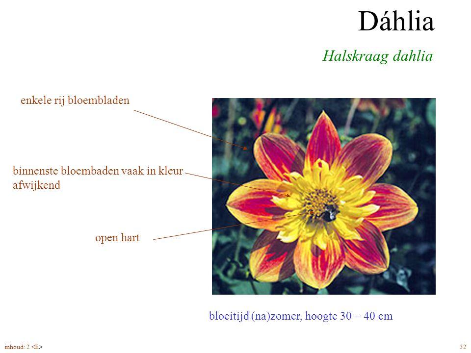 Dáhlia halskraag bloeitijd (na)zomer, hoogte 30 – 40 cm Halskraag dahlia Dáhlia enkele rij bloembladen open hart binnenste bloembaden vaak in kleur afwijkend inhoud: 2 32