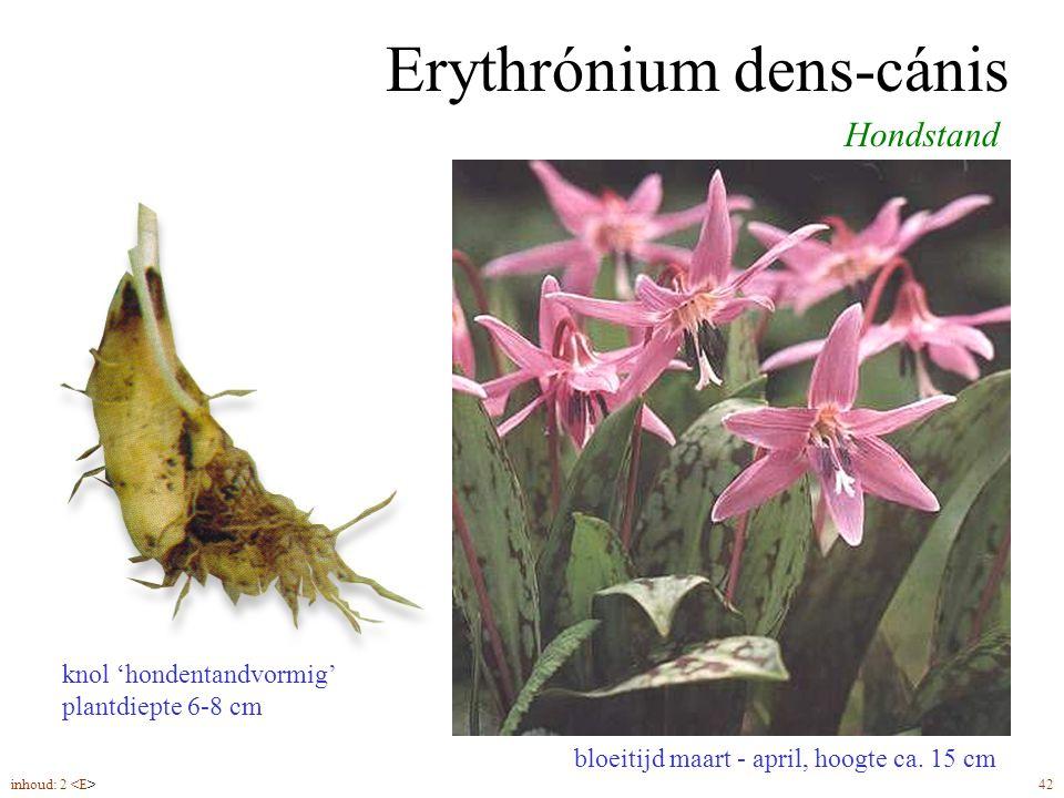 Erythrónium dens-cánis bloeitijd maart - april, hoogte ca. 15 cm Hondstand knol 'hondentandvormig' plantdiepte 6-8 cm inhoud: 2 42