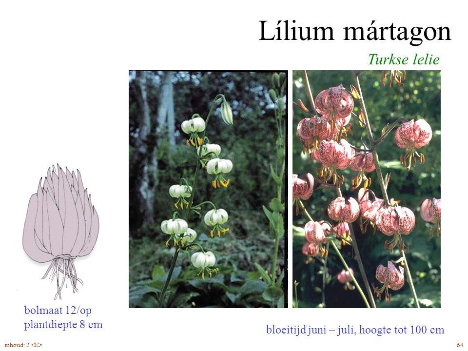 Lílium mártagon bloeitijd juni – juli, hoogte tot 100 cm Turkse lelie inhoud: 2 64 bolmaat 12/op plantdiepte 8 cm