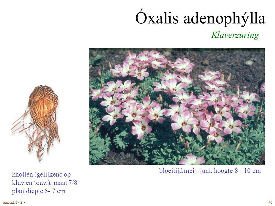 Óxalis adenophýlla bloeitijd mei - juni, hoogte 8 - 10 cm Klaverzuring knollen (gelijkend op kluwen touw), maat 7/8 plantdiepte 6- 7 cm inhoud: 2 90