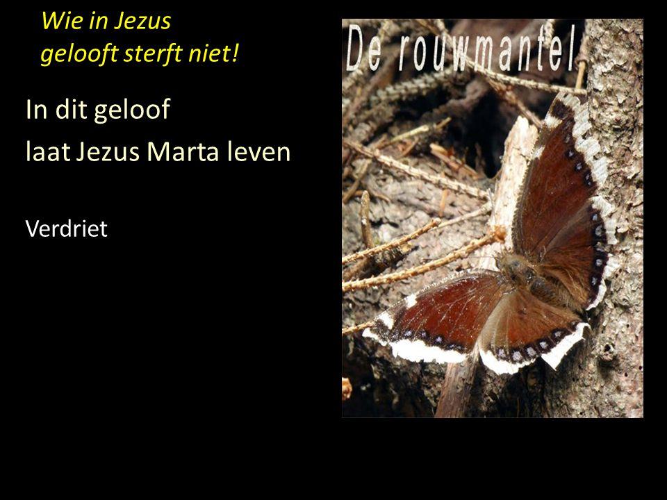 Wie in Jezus gelooft sterft niet! In dit geloof laat Jezus Marta leven Verdriet