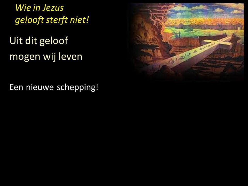 Wie in Jezus gelooft sterft niet! Uit dit geloof mogen wij leven Een nieuwe schepping!