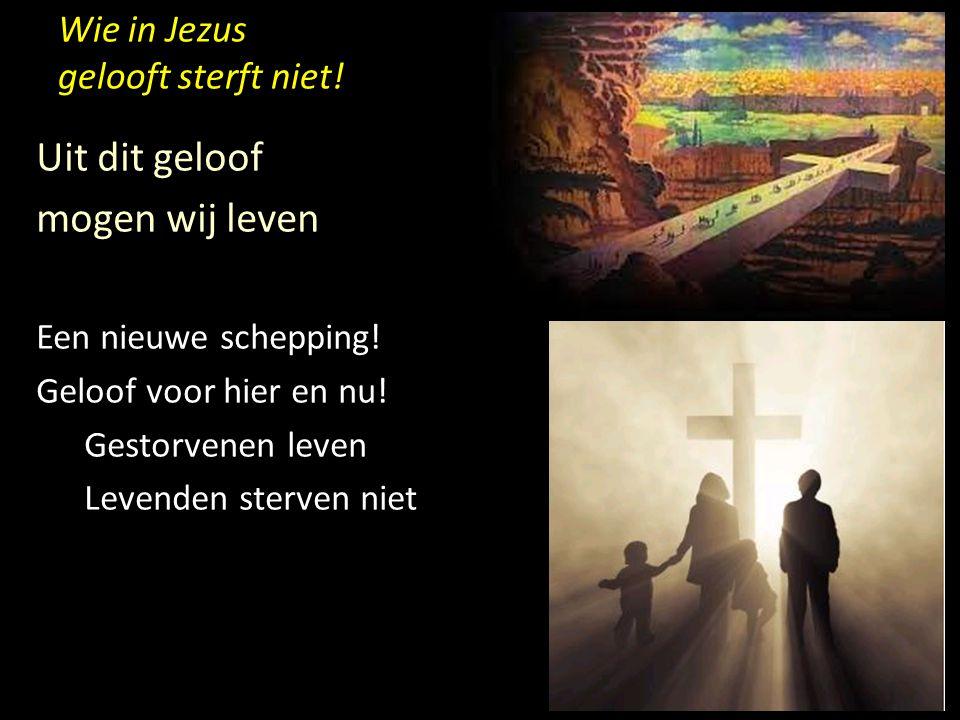 Wie in Jezus gelooft sterft niet! Uit dit geloof mogen wij leven Een nieuwe schepping! Geloof voor hier en nu! Gestorvenen leven Levenden sterven niet