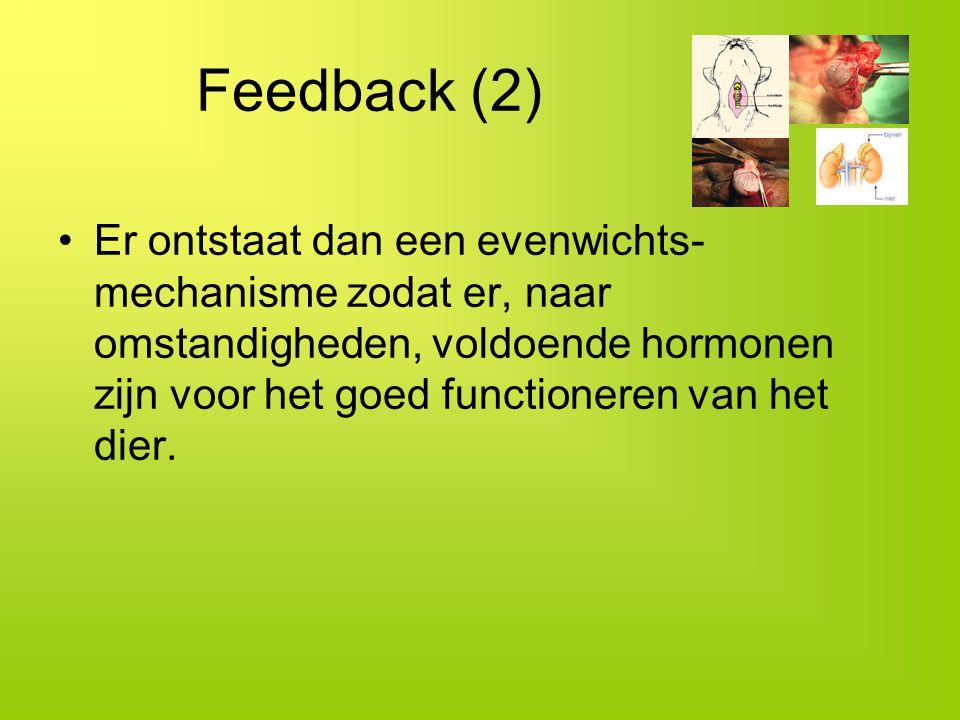 Feedback (2) Er ontstaat dan een evenwichts- mechanisme zodat er, naar omstandigheden, voldoende hormonen zijn voor het goed functioneren van het dier