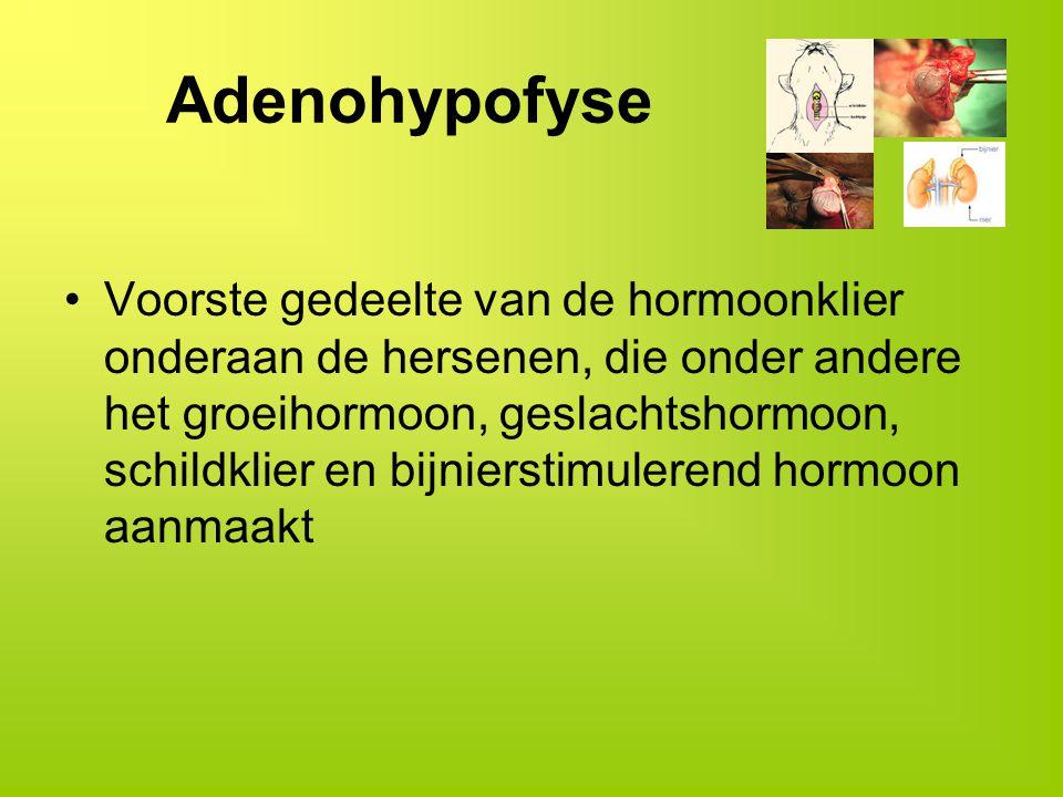 Adenohypofyse Voorste gedeelte van de hormoonklier onderaan de hersenen, die onder andere het groeihormoon, geslachtshormoon, schildklier en bijnierst