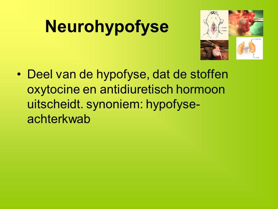 Neurohypofyse Deel van de hypofyse, dat de stoffen oxytocine en antidiuretisch hormoon uitscheidt. synoniem: hypofyse- achterkwab