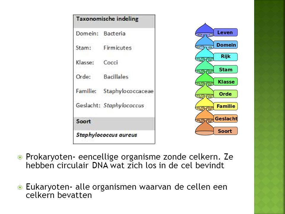 Prokaryoten- eencellige organisme zonde celkern. Ze hebben circulair DNA wat zich los in de cel bevindt  Eukaryoten- alle organismen waarvan de cel