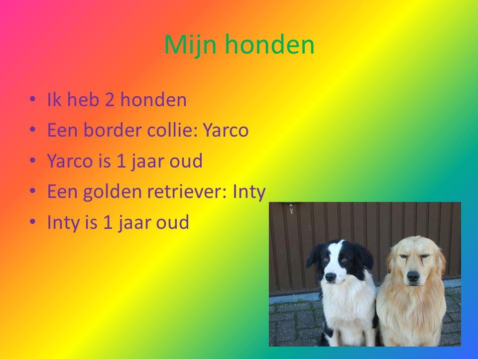 Mijn honden Ik heb 2 honden Een border collie: Yarco Yarco is 1 jaar oud Een golden retriever: Inty Inty is 1 jaar oud