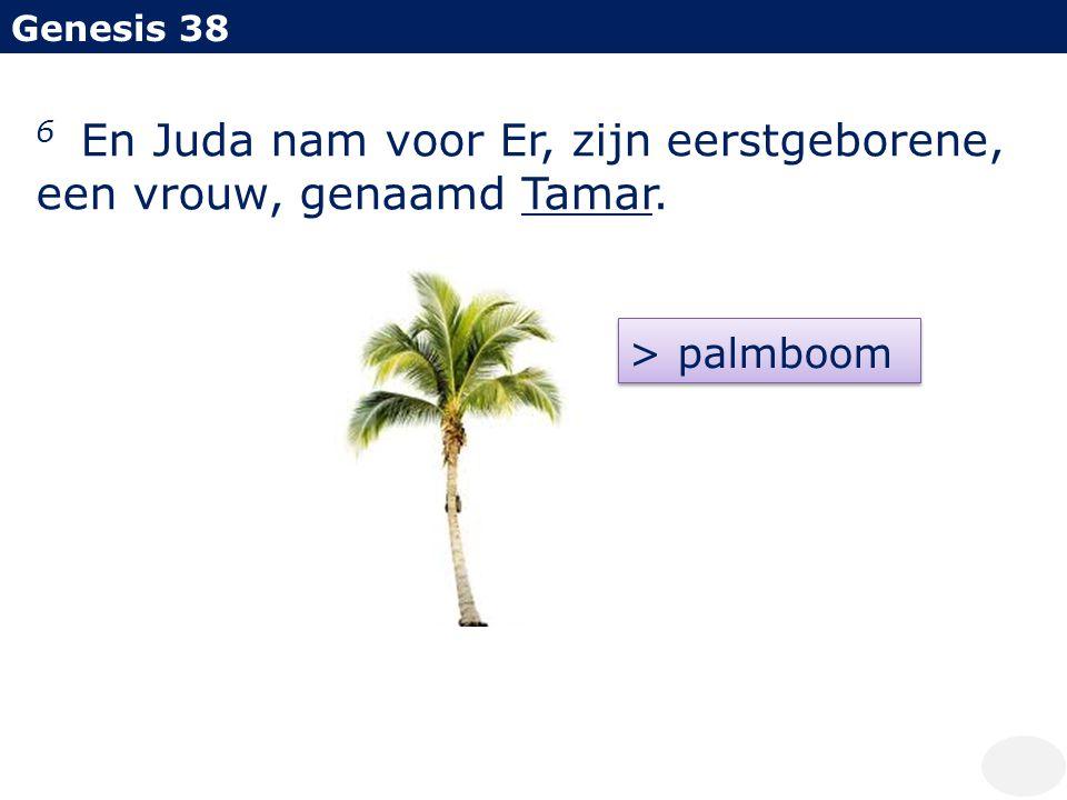 Genesis 38 6 En Juda nam voor Er, zijn eerstgeborene, een vrouw, genaamd Tamar. > palmboom