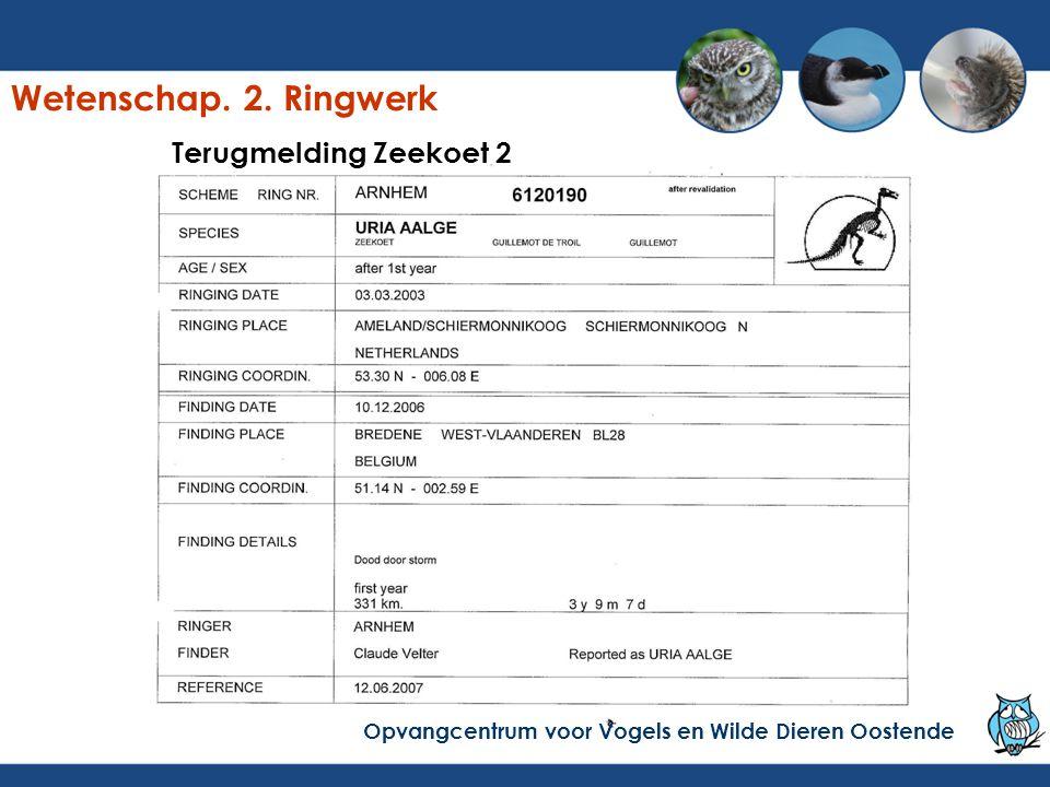 Terugmelding Zeekoet 2 Opvangcentrum voor Vogels en Wilde Dieren Oostende Wetenschap. 2. Ringwerk