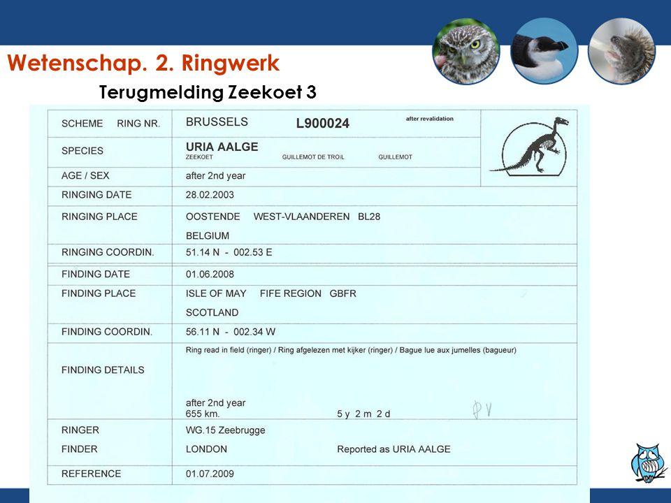 Terugmelding Zeekoet 3 Wetenschap. 2. Ringwerk