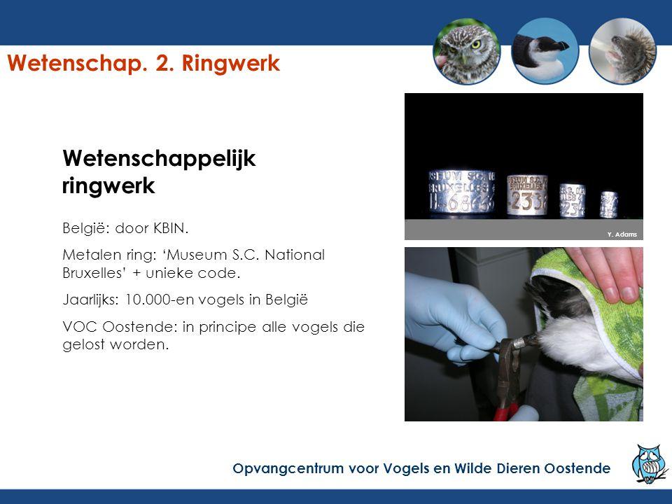 Wetenschappelijk ringwerk België: door KBIN. Metalen ring: 'Museum S.C.