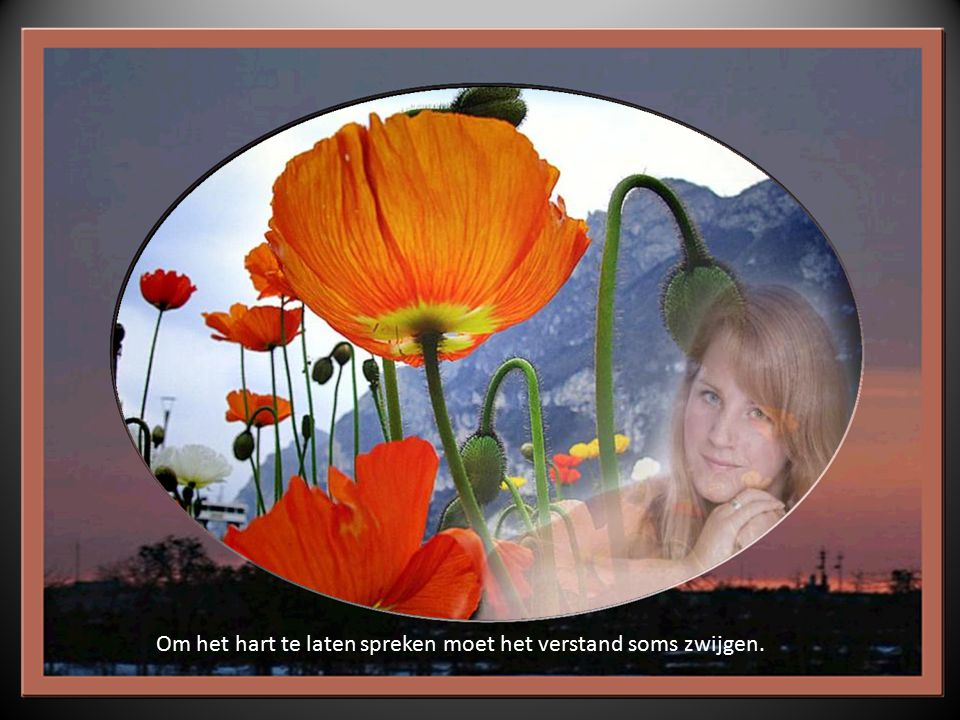 Ieder bloempje, met liefde gegeven, vertelt een mooi verhaal.