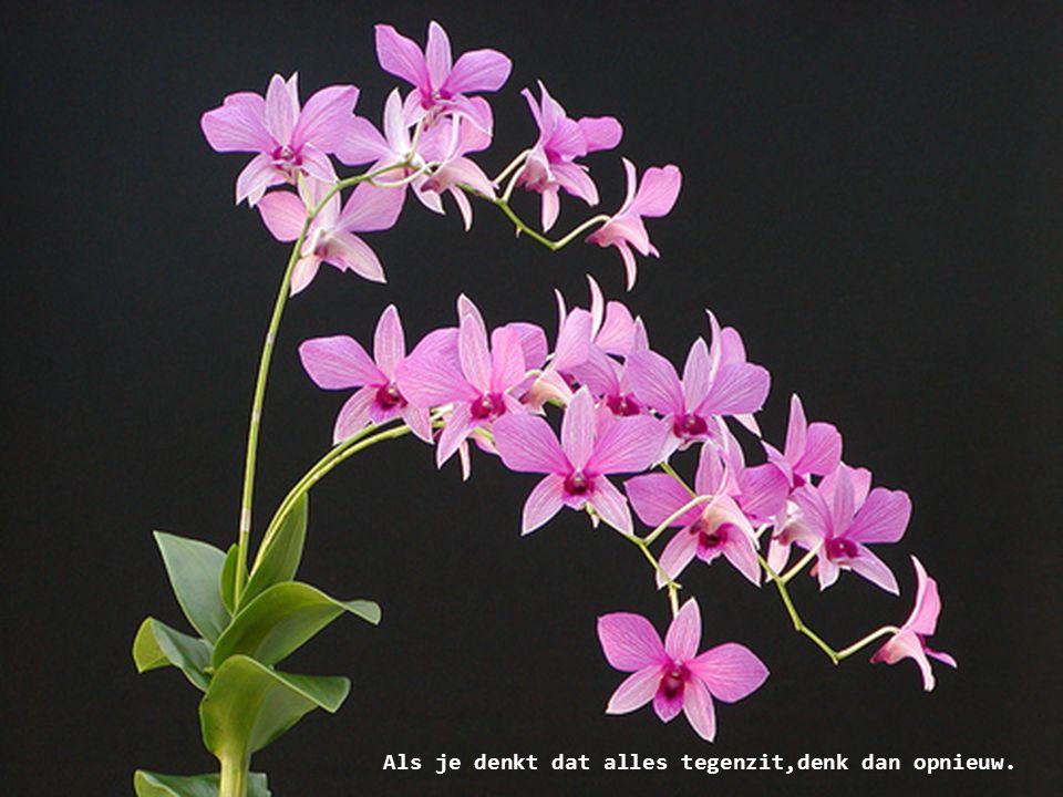 Ook al zouden we alle bloemen plukken, de lente zullen we niet kunnen tegenhouden.