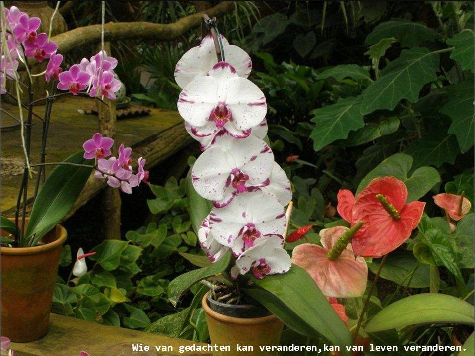 Bloemen houden van mensen en andersom, of is het de bloemist??? Mieke