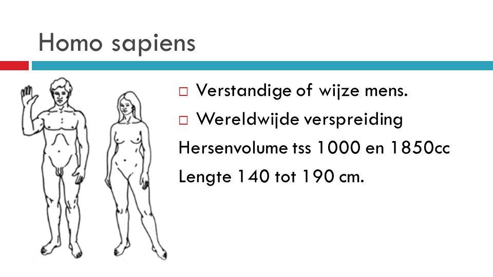 Homo sapiens  Verstandige of wijze mens.  Wereldwijde verspreiding Hersenvolume tss 1000 en 1850cc Lengte 140 tot 190 cm.