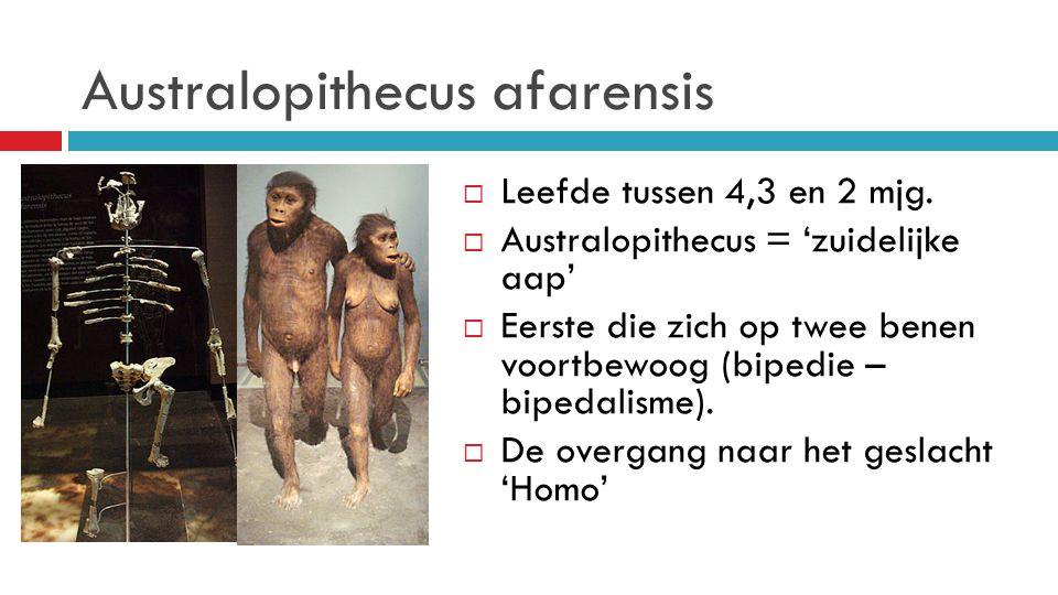 Australopithecus afarensis  Leefde tussen 4,3 en 2 mjg.  Australopithecus = 'zuidelijke aap'  Eerste die zich op twee benen voortbewoog (bipedie –