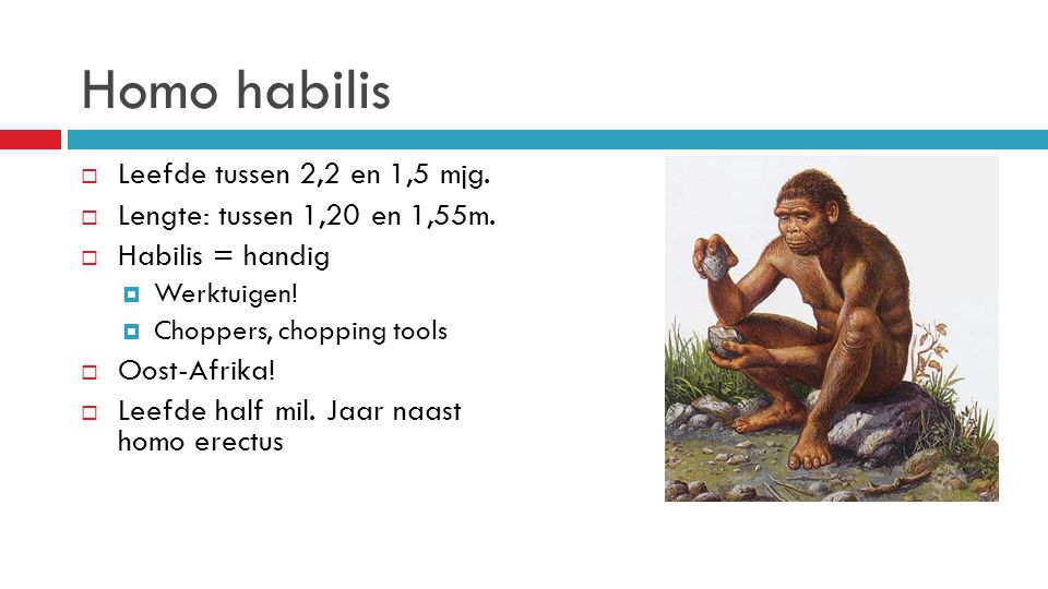 Homo habilis  Leefde tussen 2,2 en 1,5 mjg.  Lengte: tussen 1,20 en 1,55m.  Habilis = handig  Werktuigen!  Choppers, chopping tools  Oost-Afrika