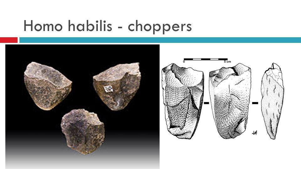 Homo erectus  Erectus = rechtoplopend  Leefde tussen 1,9 mjg en 400000jg.