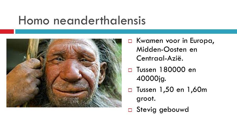 Homo neanderthalensis  Kwamen voor in Europa, Midden-Oosten en Centraal-Azië.  Tussen 180000 en 40000jg.  Tussen 1,50 en 1,60m groot.  Stevig gebo