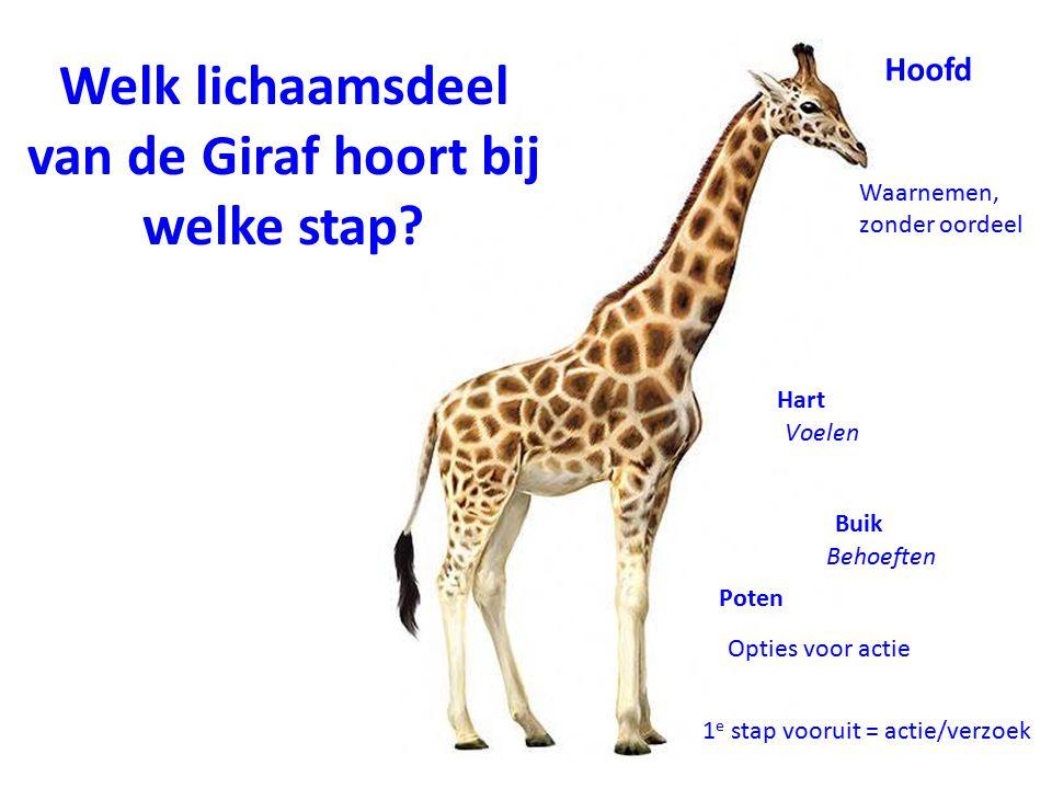 Welk lichaamsdeel van de Giraf hoort bij welke stap? Hoofd Waarnemen, zonder oordeel Hart Voelen Buik Behoeften Poten Opties voor actie 1 e stap vooru