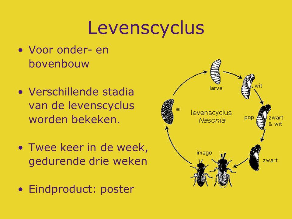 Levenscyclus Voor onder- en bovenbouw Verschillende stadia van de levenscyclus worden bekeken. Twee keer in de week, gedurende drie weken Eindproduct:
