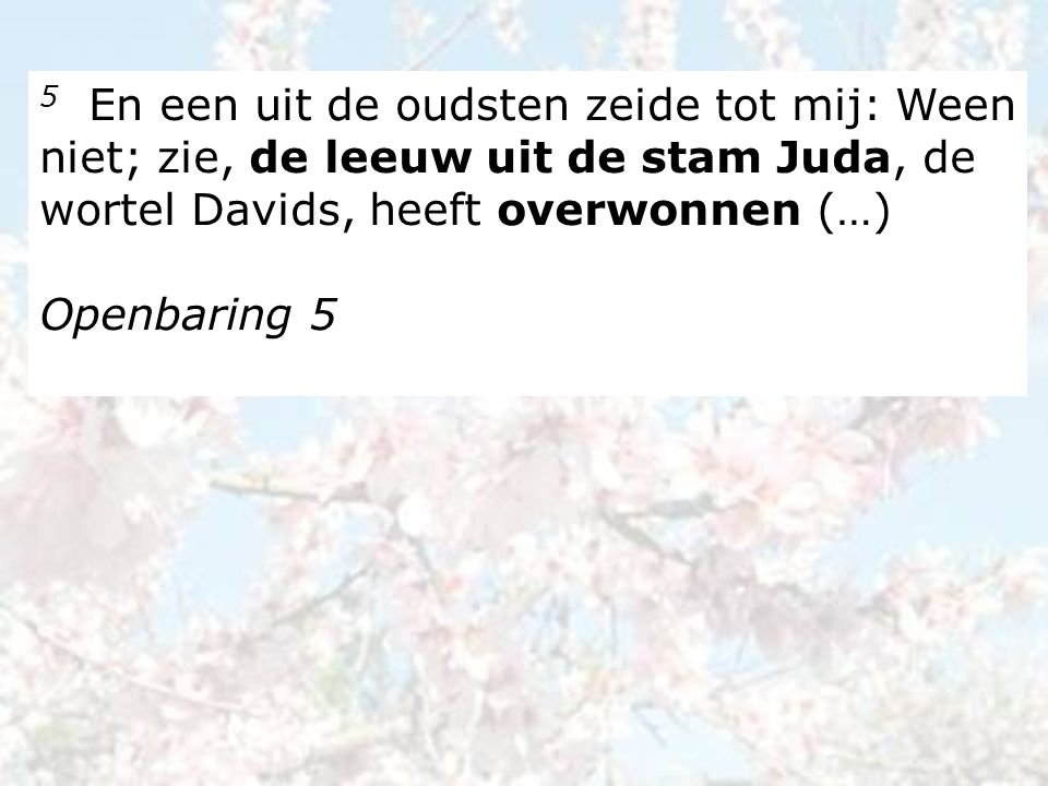 5 En een uit de oudsten zeide tot mij: Ween niet; zie, de leeuw uit de stam Juda, de wortel Davids, heeft overwonnen (…) Openbaring 5
