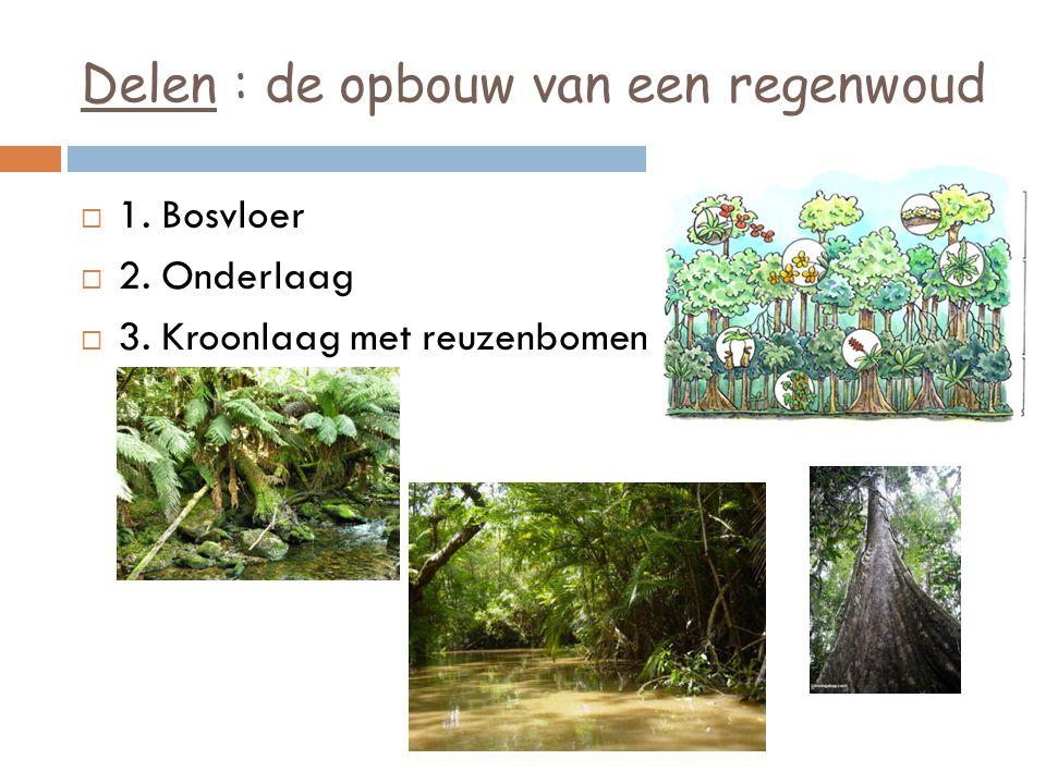 Delen : de opbouw van een regenwoud  1. Bosvloer  2. Onderlaag  3. Kroonlaag met reuzenbomen
