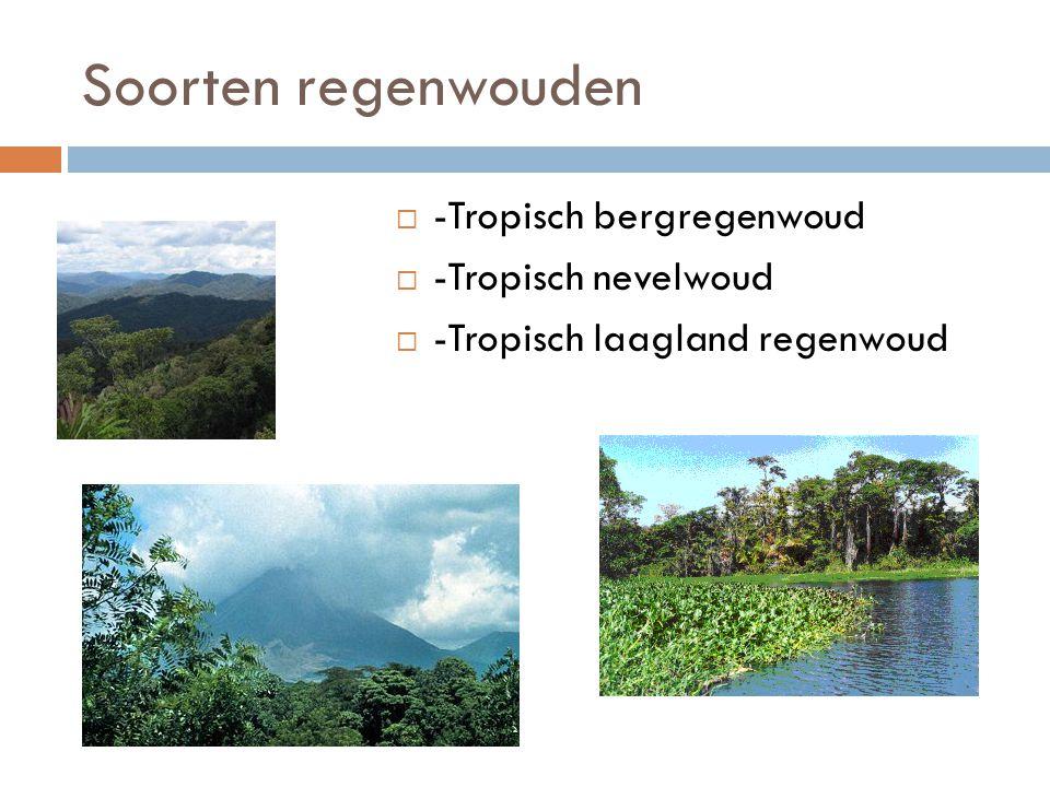 Soorten regenwouden  -Tropisch bergregenwoud  -Tropisch nevelwoud  -Tropisch laagland regenwoud
