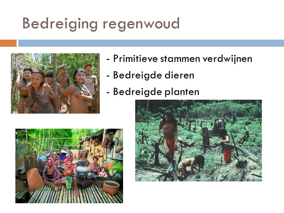 Bedreiging regenwoud - - Primitieve stammen verdwijnen - - Bedreigde dieren - - Bedreigde planten