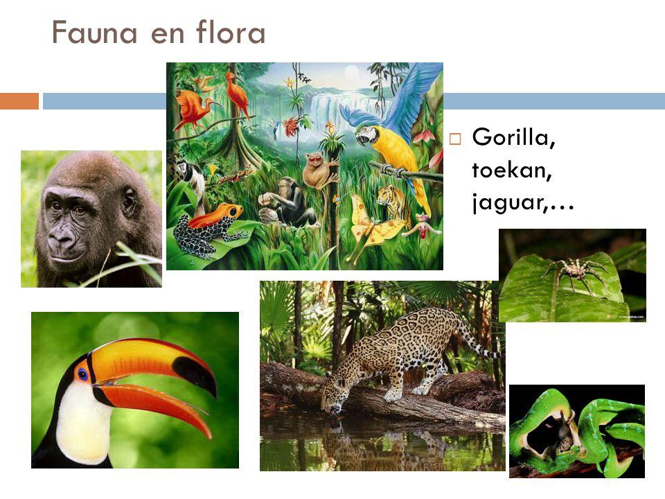 Fauna en flora  Gorilla, toekan, jaguar,…