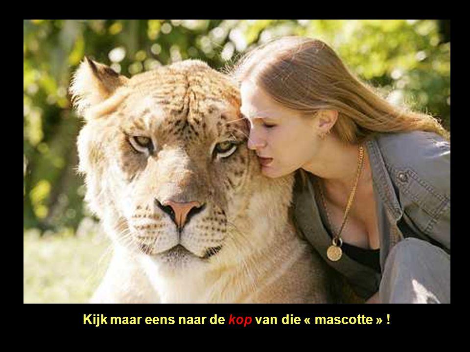 Hercules kan zwemmen zoals de tijgers, iets wat leeuwen niet kunnen. Hij haalt een snelheid van 80 km/uur (althans voorlopig).