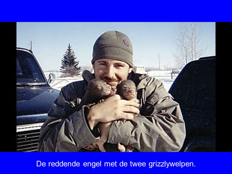 Een man vond in Alaska 2 grizzlywelpen bij hun dode moeder. Een welp overleefde en de man slaagde erin de welp groot te brengen. U kunt zien hoe zijn