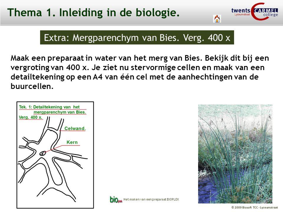 © 2009 Biosoft TCC - Lyceumstraat Extra: Mergparenchym van Bies. Verg. 400 x celwand Thema 1. Inleiding in de biologie. Maak een preparaat in water va