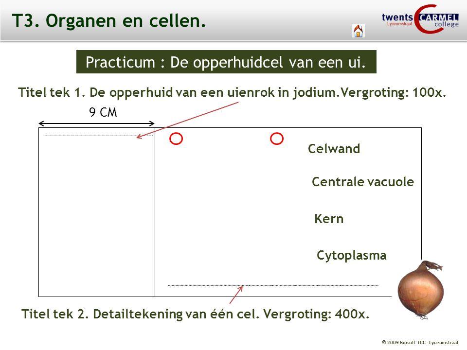 © 2009 Biosoft TCC - Lyceumstraat T3. Organen en cellen. Practicum : De opperhuidcel van een ui. Titel tek 1. De opperhuid van een uienrok in jodium.V