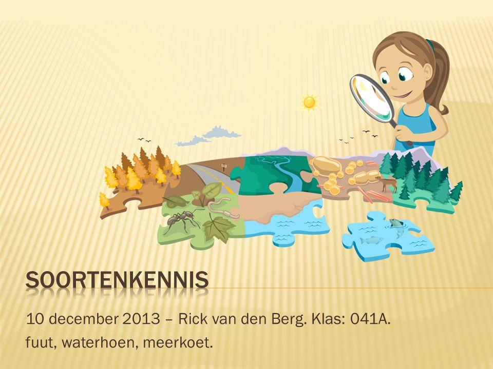 10 december 2013 – Rick van den Berg. Klas: 041A. fuut, waterhoen, meerkoet.