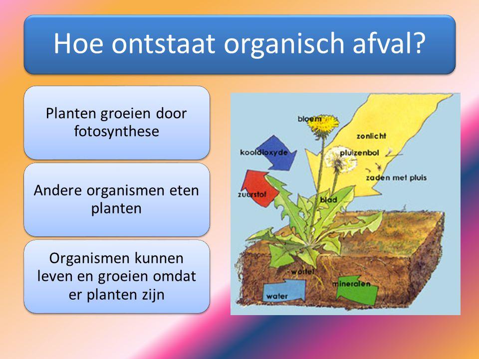 Hoe ontstaat organisch afval? Planten groeien door fotosynthese Andere organismen eten planten Organismen kunnen leven en groeien omdat er planten zij