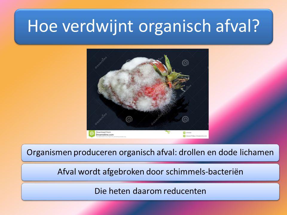 Hoe verdwijnt organisch afval? Organismen produceren organisch afval: drollen en dode lichamenAfval wordt afgebroken door schimmels-bacteriënDie heten