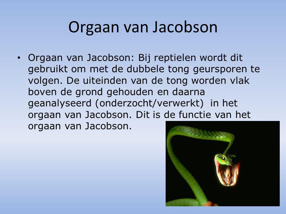Orgaan van Jacobson Orgaan van Jacobson: Bij reptielen wordt dit gebruikt om met de dubbele tong geursporen te volgen.