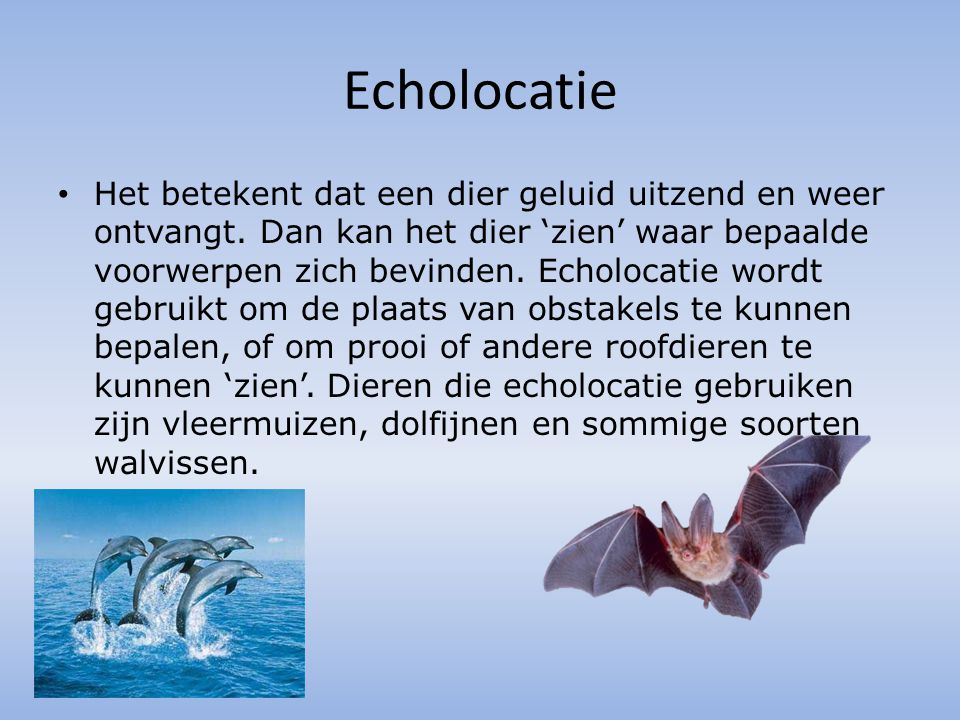 Echolocatie Het betekent dat een dier geluid uitzend en weer ontvangt. Dan kan het dier 'zien' waar bepaalde voorwerpen zich bevinden. Echolocatie wor