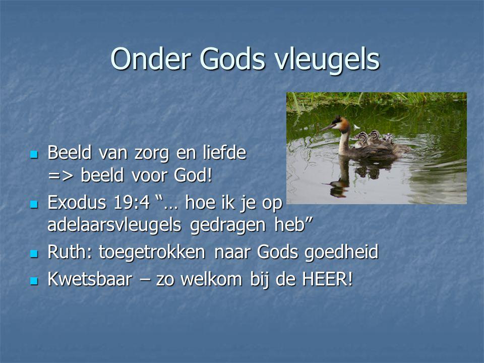 Onder Gods vleugels Beeld van zorg en liefde => beeld voor God.