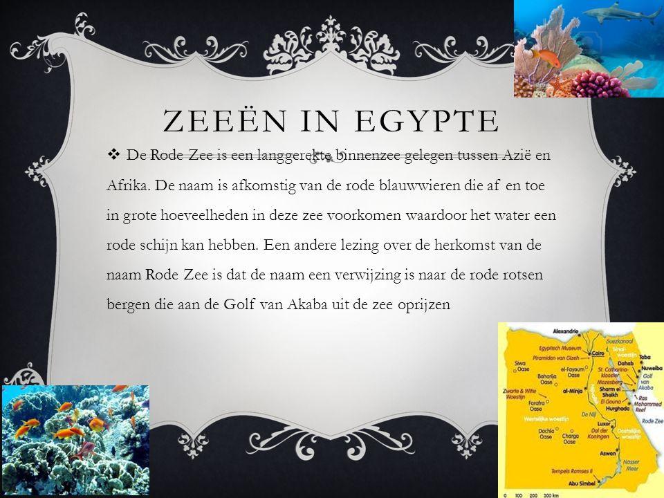 ZEEËN IN EGYPTE  De Rode Zee is een langgerekte binnenzee gelegen tussen Azië en Afrika. De naam is afkomstig van de rode blauwwieren die af en toe i