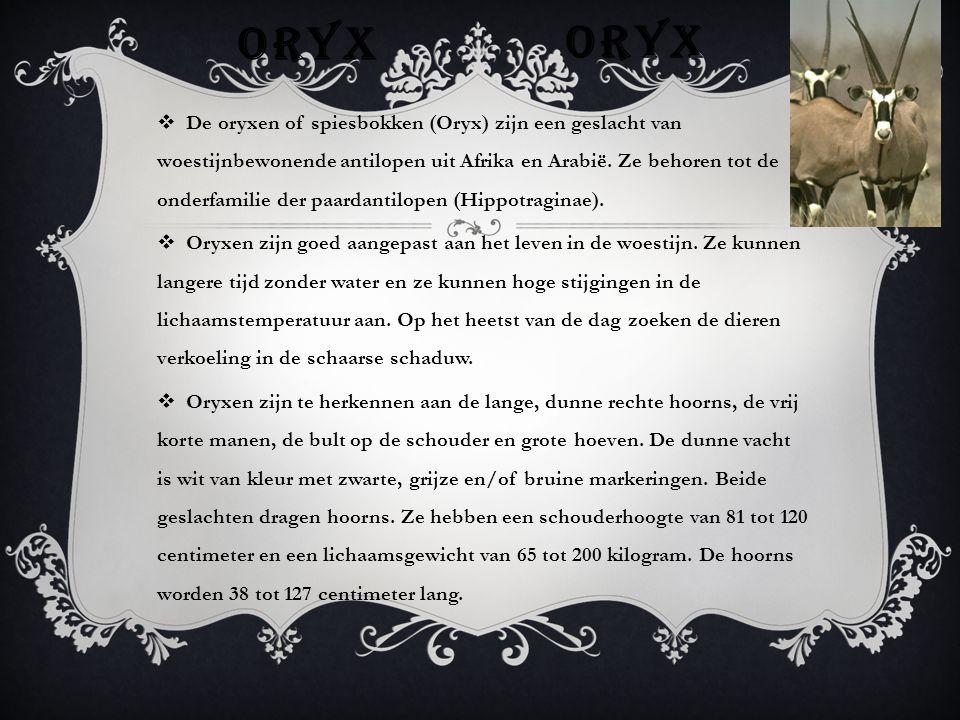 JACHTLUIPAARD  De jachtluipaard is aangepast aan jagen met een korte, zeer snelle sprint.