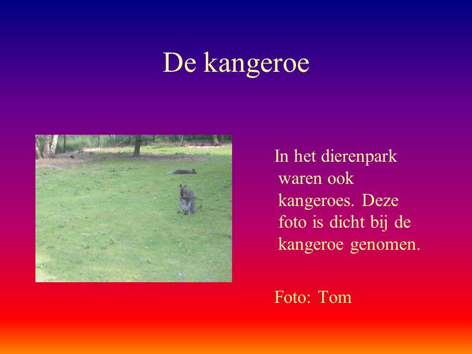 De kangeroe In het dierenpark waren ook kangeroes. Deze foto is dicht bij de kangeroe genomen. Foto: Tom