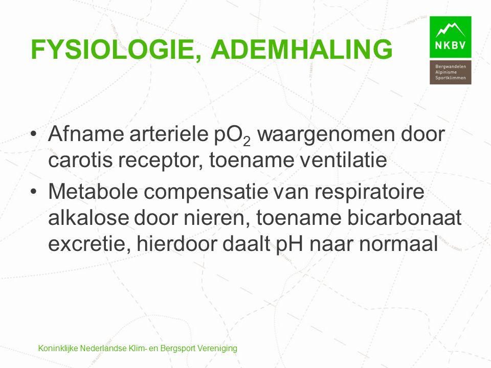 Koninklijke Nederlandse Klim- en Bergsport Vereniging FYSIOLOGIE, ADEMHALING Afname arteriele pO 2 waargenomen door carotis receptor, toename ventilat