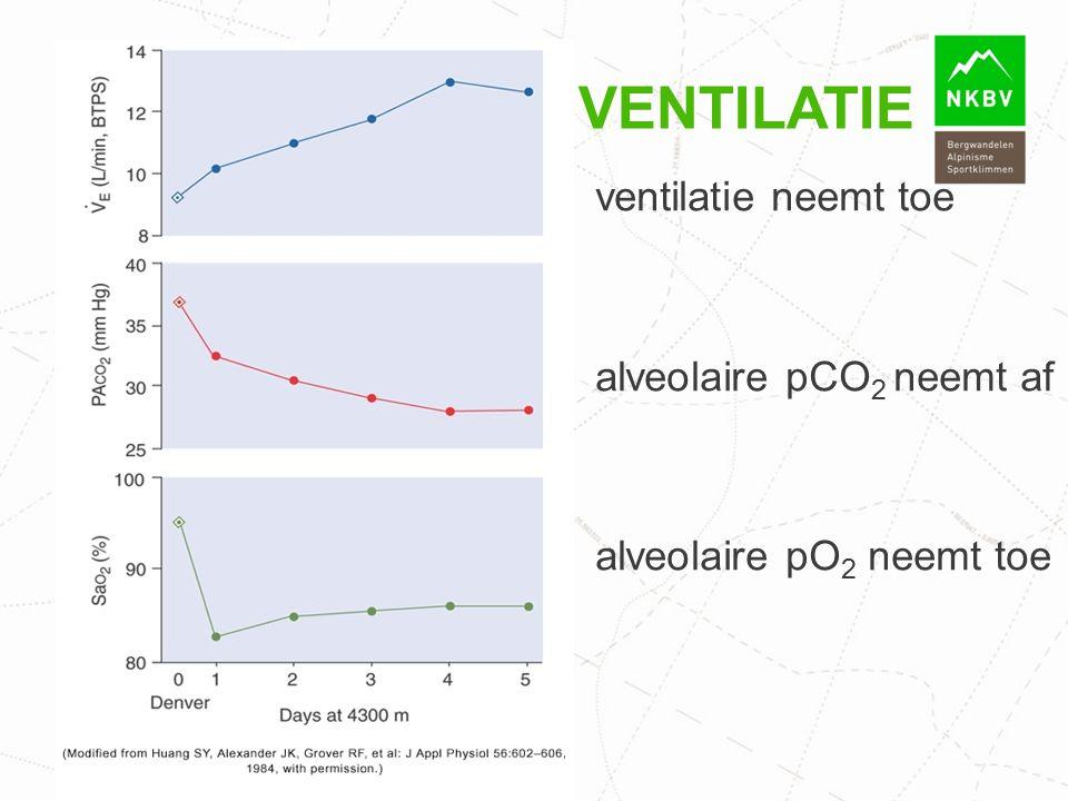 VENTILATIE ventilatie neemt toe alveolaire pCO 2 neemt af alveolaire pO 2 neemt toe