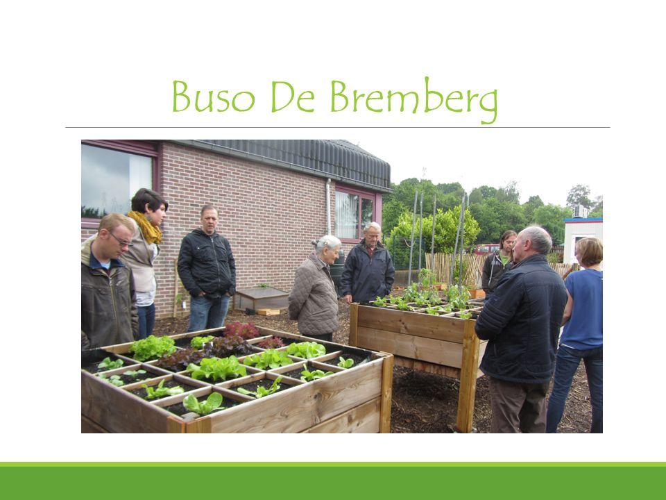 Buso De Bremberg