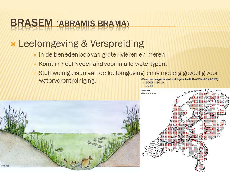  Leefomgeving & Verspreiding  In de benedenloop van grote rivieren en meren.  Komt in heel Nederland voor in alle watertypen.  Stelt weinig eisen
