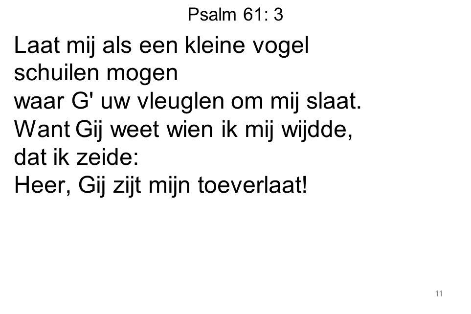 Psalm 61: 3 Laat mij als een kleine vogel schuilen mogen waar G uw vleuglen om mij slaat.