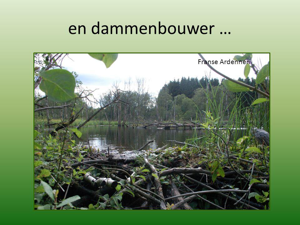 Beverdam in de Franse Ardennen, dicht bij Gedinne – augustus 2010 Beverdam in de Belgische Ardennen, Schönberg, dicht bij de Duitse grens – januari 2012